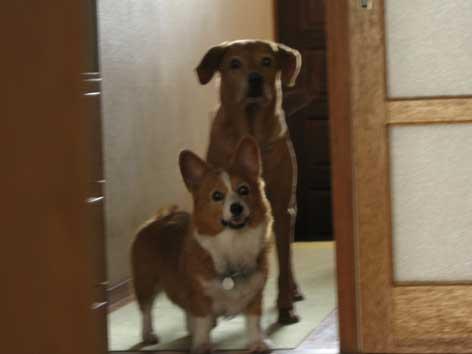 20120913hayaku.jpg