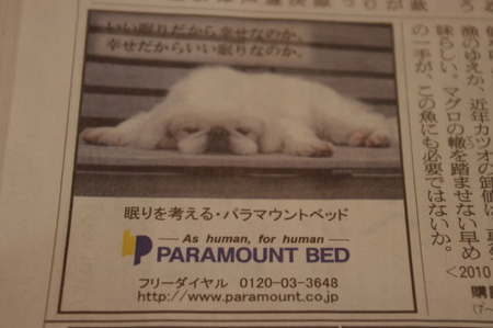 パラマウントベッドの広告のペキニーズ
