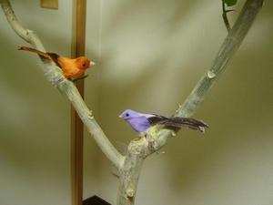 小鳥ちゃん♪