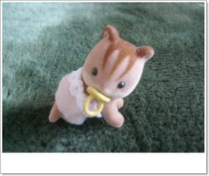 くるみリスの赤ちゃん