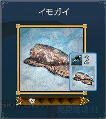 イモガイ生態5
