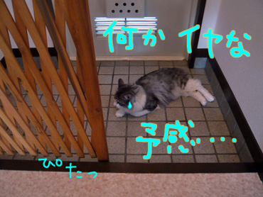 AP1160284.jpg