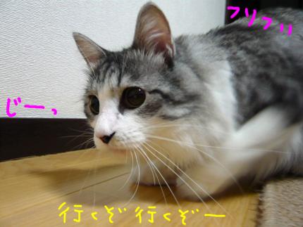 AP1170488.jpg