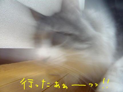 AP1170491.jpg