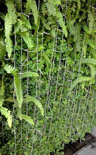 入口の緑の外壁