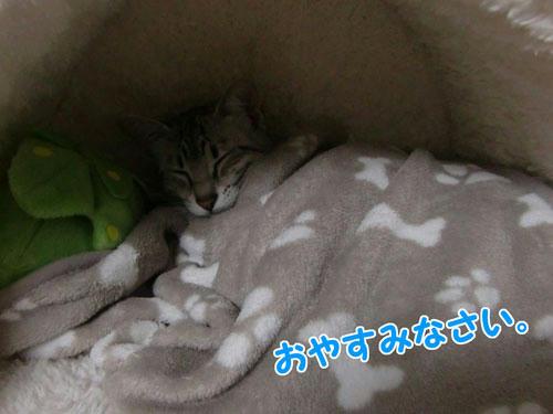 かなめ×ぶろぐ0198【ぬっくぬく☆】