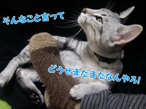 かなめ×ぶろぐ0209【ぷいっ!】