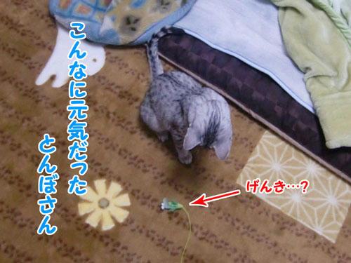 かなめ×ぶろぐ0212【とんぼさん!】
