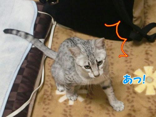 かなめ×ぶろぐ0215【その時要特派員が見たものは!!】