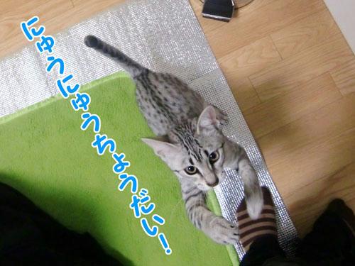 かなめ×ぶろぐ0219【ちょうだいよ!】