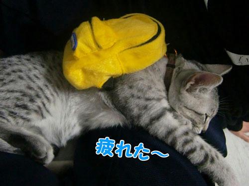 かなめ×ぶろぐ0270【だっりぃー】