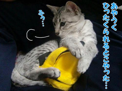 かなめ×ぶろぐ0276【死守したどー!!】