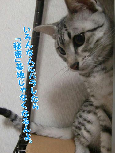 かなめ×ぶろぐ0332【ジトッ】