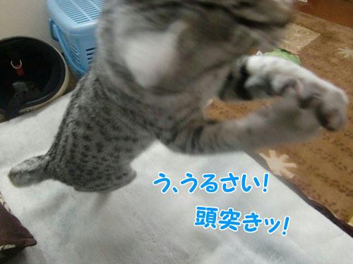 かなめ×ぶろぐ0345【ごッ!!】