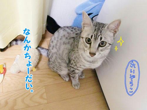 かなめ×ぶろぐ0351【きらーん☆】