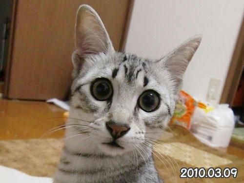 かなめ×ぶろぐ0400【2010.03.09】