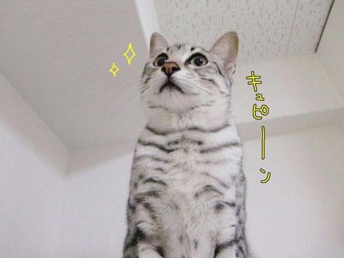 かなめ×ぶろぐ0415【どうよ?!】