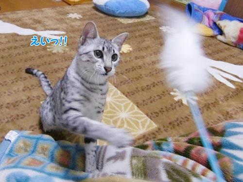 かなめ×ぶろぐ0443【とうや!】
