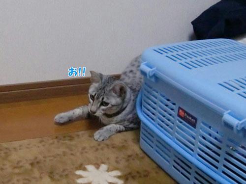 かなめ×ぶろぐ0540【あった!】