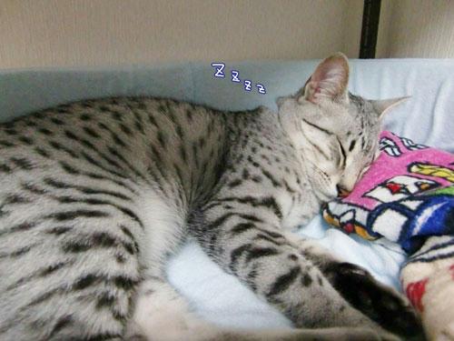 かなめ×ぶろぐ0570【おやすみー】