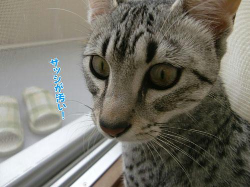 かなめ×ぶろぐ0630【サッシの掃除!!】