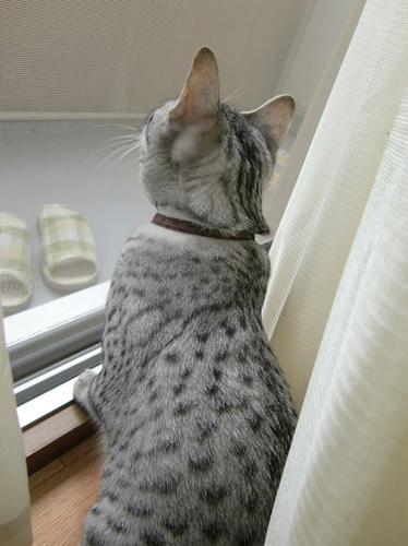 かなめ×ぶろぐ0632【雨の音】