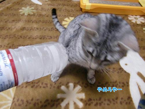 かなめ×ぶろぐ0793【やめろや!】