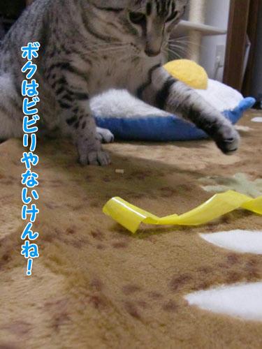 かなめ×ぶろぐ0937【ビビリじゃない!】
