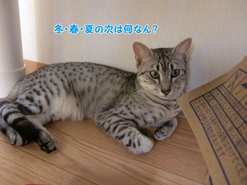 かなめ×ぶろぐ0999【冬→春→夏→?】