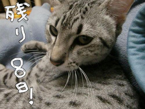 かなめ×ぶろぐ1076【残り8日!】
