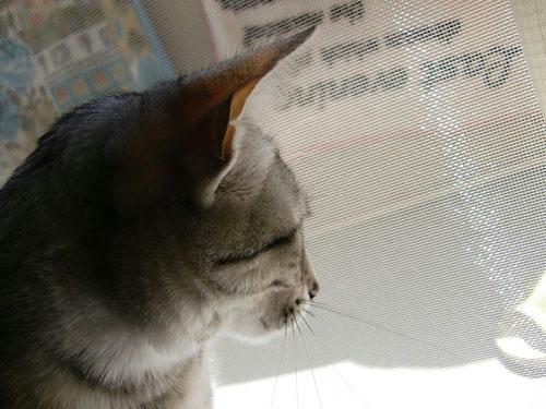 かなめ×ぶろぐ1089【横顔】