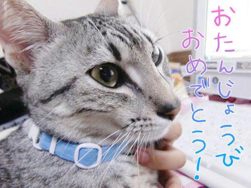 かなめ×ぶろぐ1154【おたんじょうびおめでとう!】