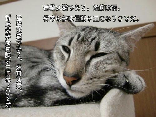かなめ×ぶろぐ1181【しねきゃぷしょん】
