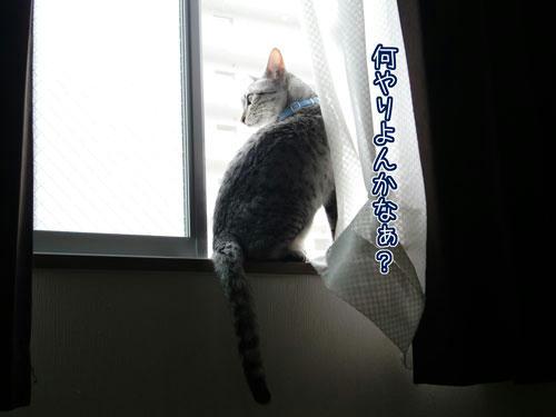 かなめ×ぶろぐ1196【何してるのかなぁ?】
