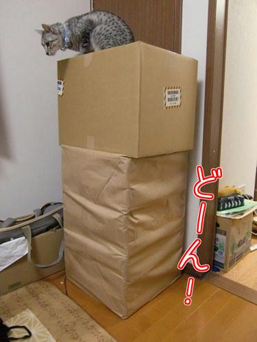 かなめ×ぶろぐ1291【でんでん!と荷物!】