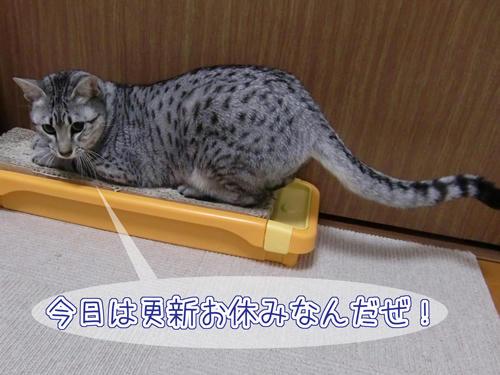 かなめ×ぶろぐ1307【お休みだよ!】