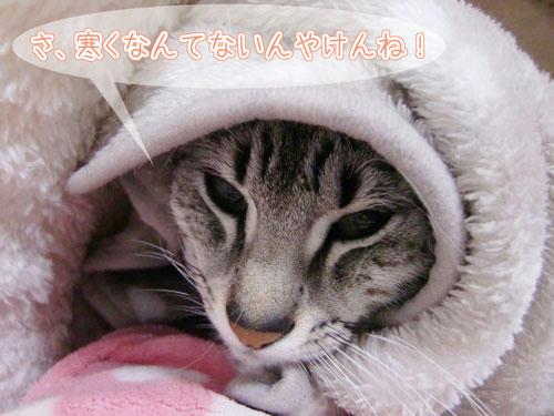 かなめ×ぶろぐ1309【寒ないんよ!!】