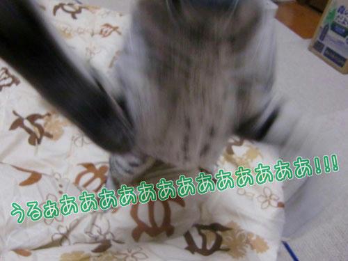 かなめ×ぶろぐ1319【くらえー!】