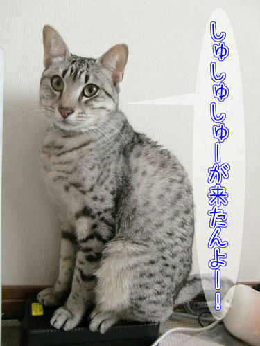 かなめ×ぶろぐ1321【しゅーがきた!】