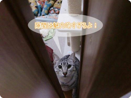 かなめ×ぶろぐ1398【隙間は魅力的】