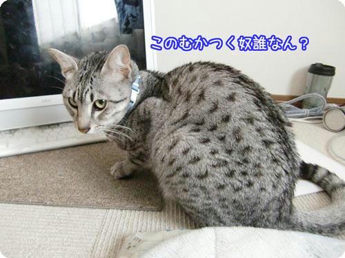 かなめ×ぶろぐ1507【こいつ誰?】