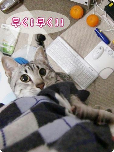 かなめ×ぶろぐ1519【早く!】
