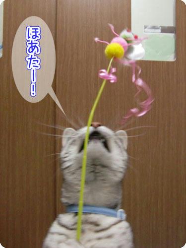 かなめ×ぶろぐ1539【ほわったー!】