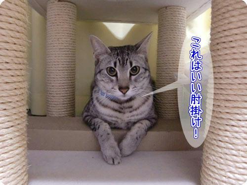 かなめ×ぶろぐ1573【いい肘掛け!】