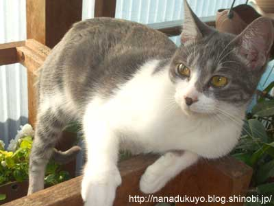 子猫ルパン