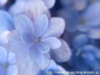 お花その3