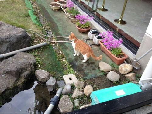ほてる大橋館の湯
