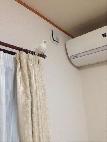 プエブコ(PUEBCO)の白フクロウ