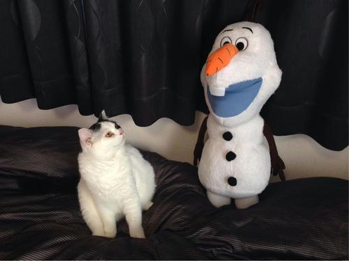 オラフ ぬいぐるみ 猫