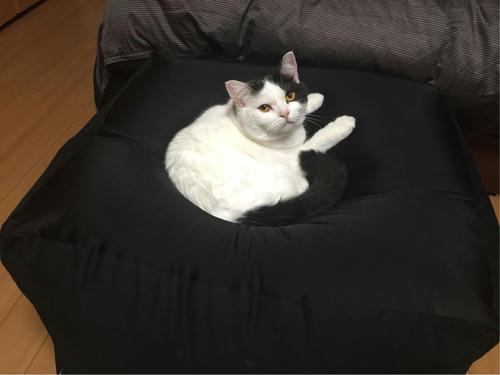 人をダメにするソファ 猫